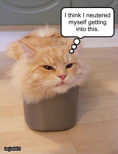 neutered caption bucket Cats - 8793414144