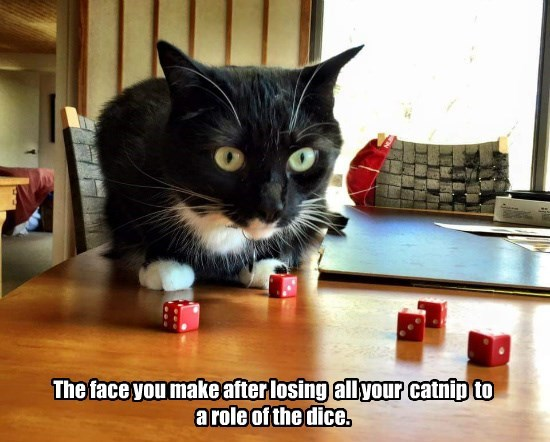 catnip dice caption Cats - 8793448704