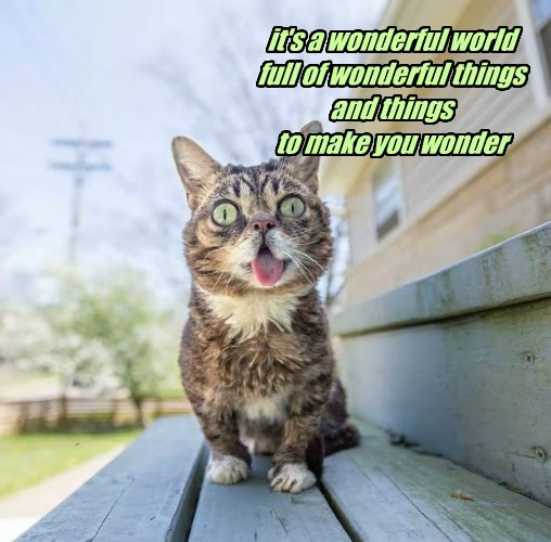 it's a wonderful world full of wonderful things and things  to make you wonder