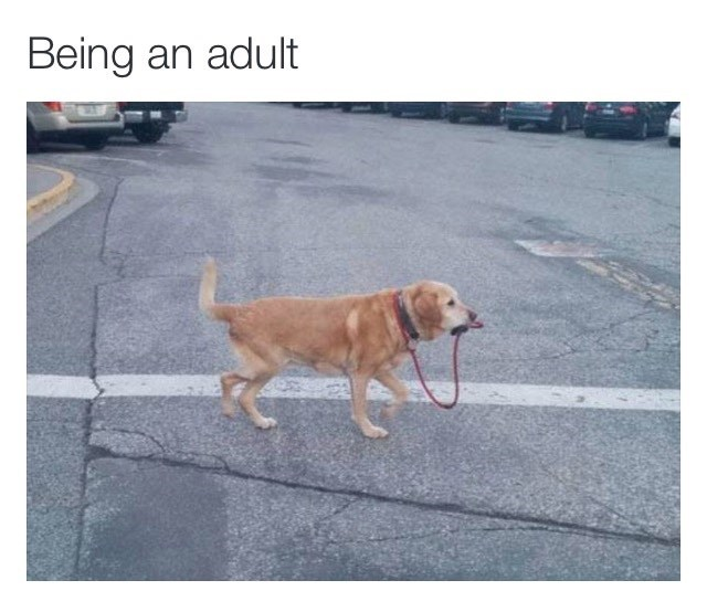 adulthood dogs memes Is That All It Takes?
