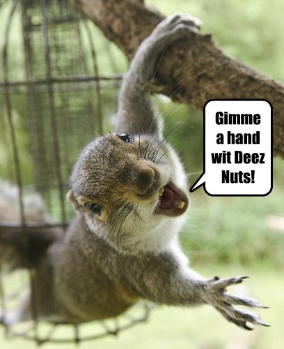NO! Not Deem Nuts!
