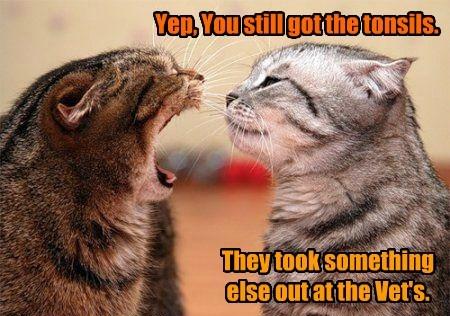 something took tonsils vet caption Cats - 8793578496