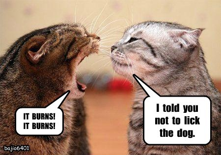 dogs lick burns caption Cats - 8793606400