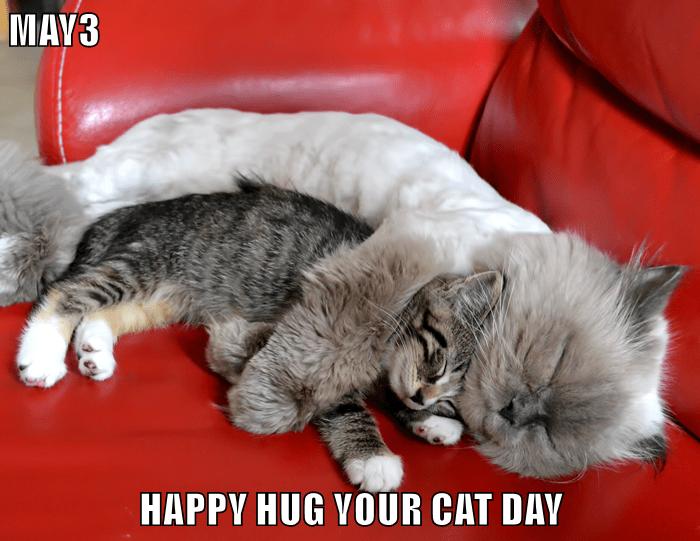 cat,day,caption,hug