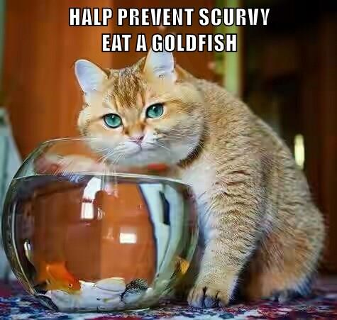 HALP PREVENT SCURVY                                     EAT A GOLDFISH