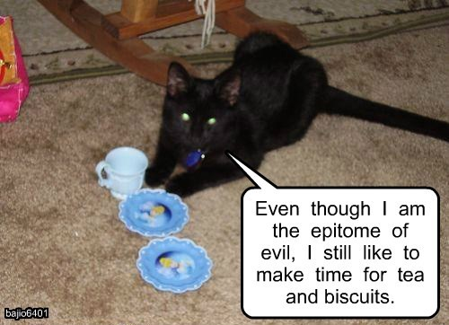 basement cat,evil,tea,caption,Cats