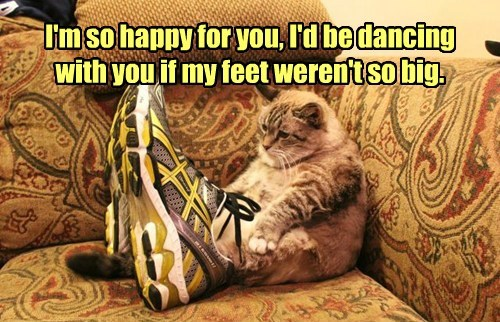 dancing feet caption Cats - 8793675264