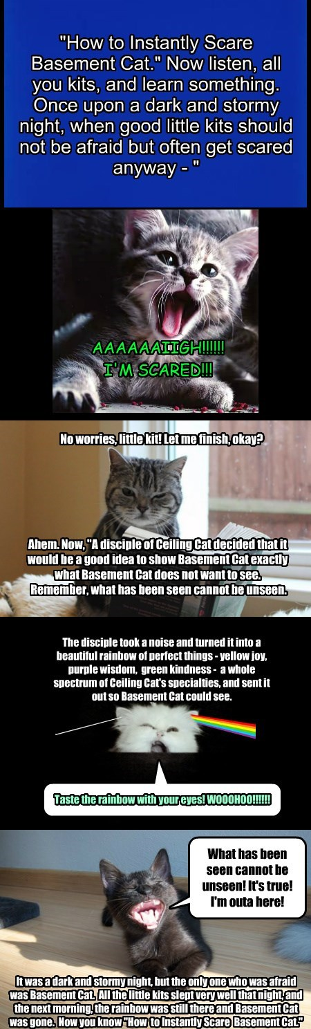 basement cat scary stories caption - 8793711104