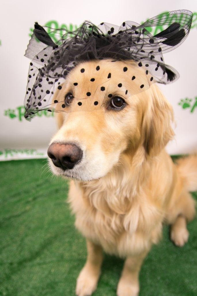 Dog - Kover