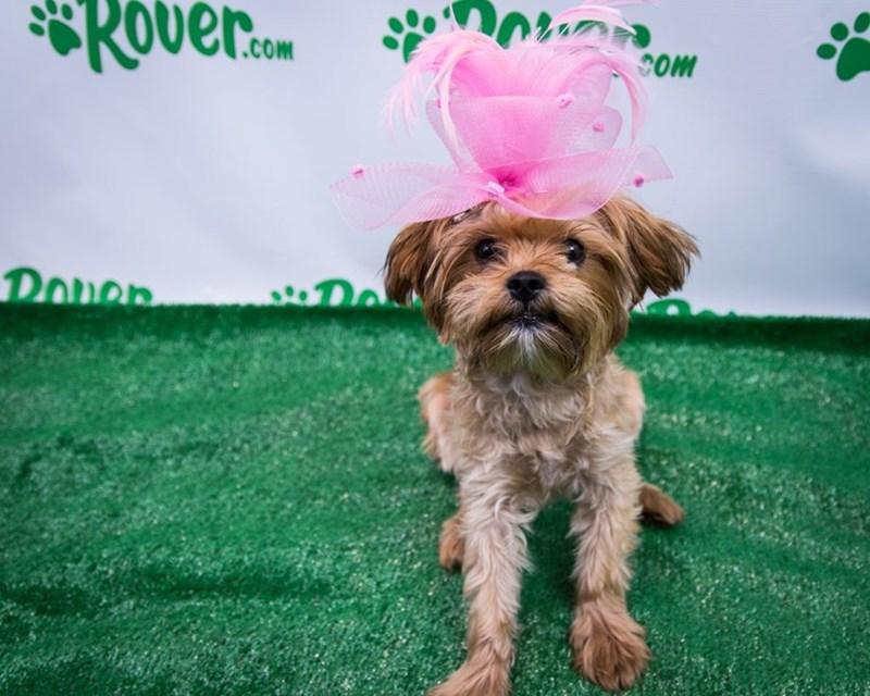 Dog - Roverm .COm COm Doner