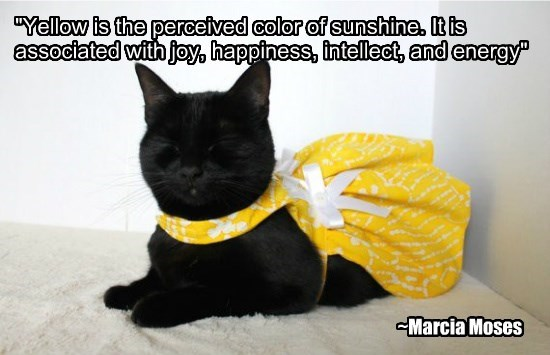 """""""Yellow is the perceived color of sunshine. It is associated with joy, happiness, intellect, and energy"""""""