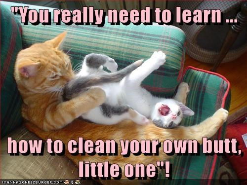 Lolcats Clean Lol At Funny Cat Memes Funny Cat Pictures With
