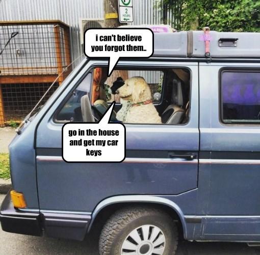 dogs squabbles caption road trip - 8793762048