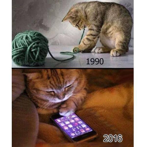 gatos modernos