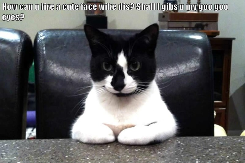 animals cat face fire cute caption - 8793784320