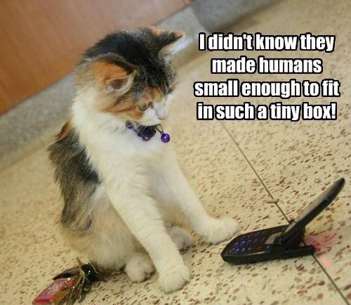 fit box kitten humans small caption Cats - 8793786112