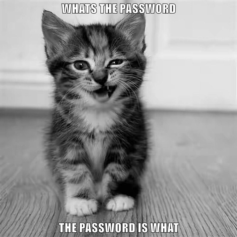 """This Kitty's Humor Was Inspired By Abbot And Costello's """"WHO'S On First"""""""