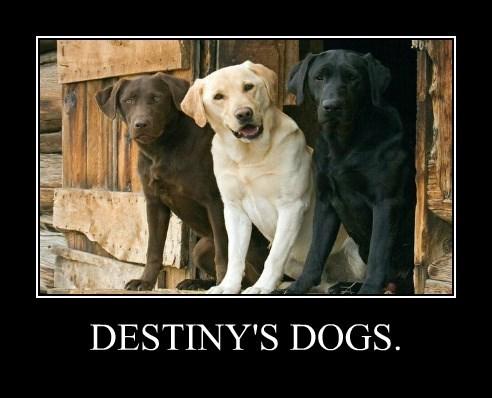 DESTINY'S DOGS.