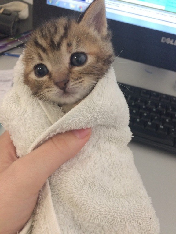 The Only Thing Better Than a Burrito, Is a Purrito