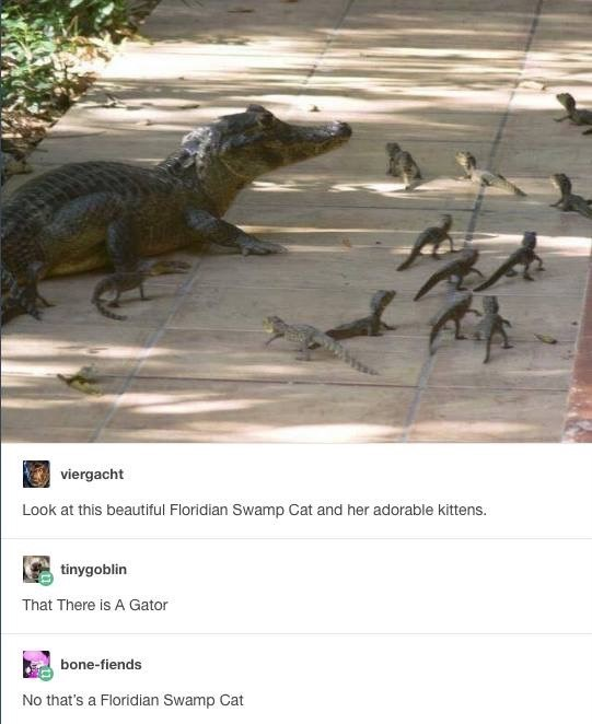 dont be fooled by the florida swamp cat