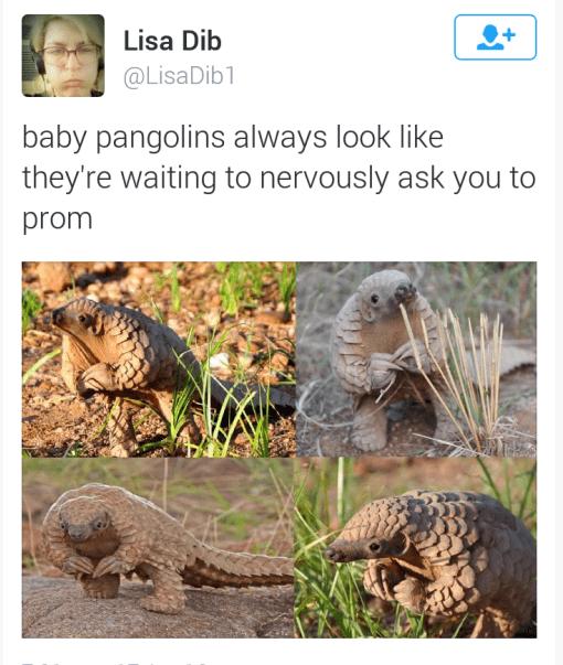 twitter prom animals - 8793998592