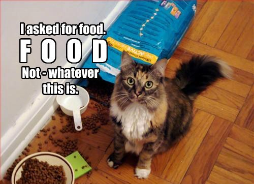 cat,whatever,food,caption