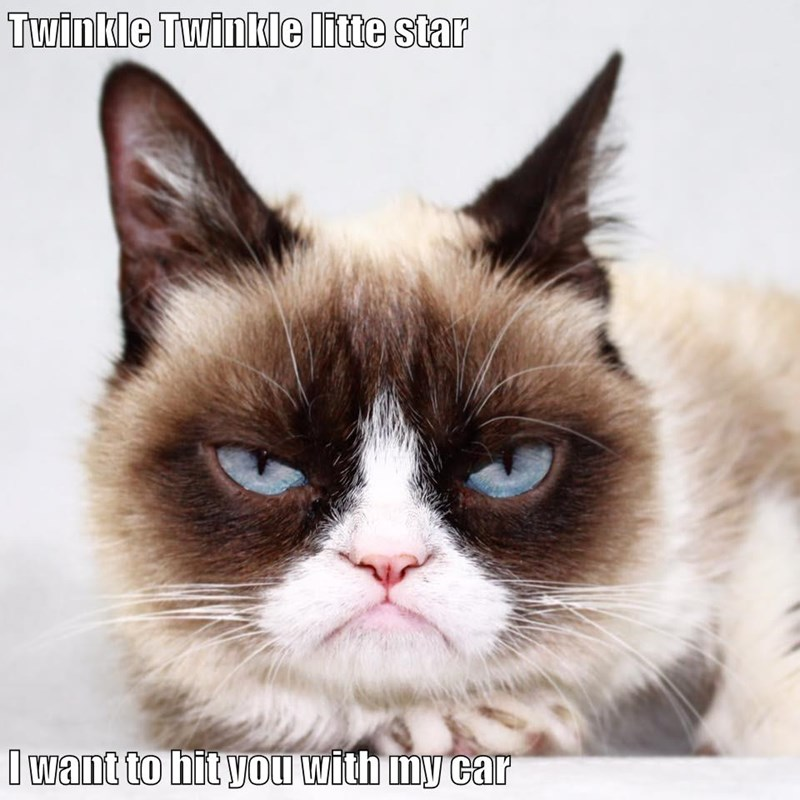 animals poem car caption Grumpy Cat Cats - 8794010112