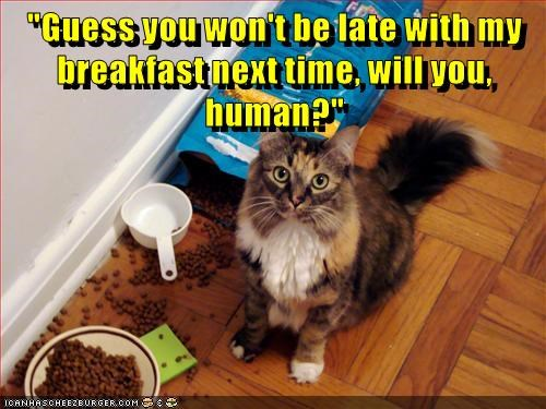 """Guess you won't be late with my breakfast next time, will you, human?"""