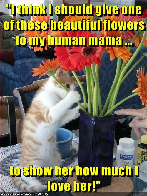 animals cat Flower love caption beautiful mama mothers day
