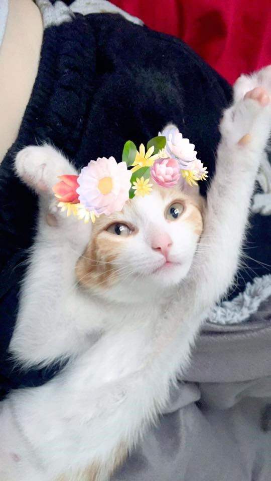 coachella kitten loves snapchat filters