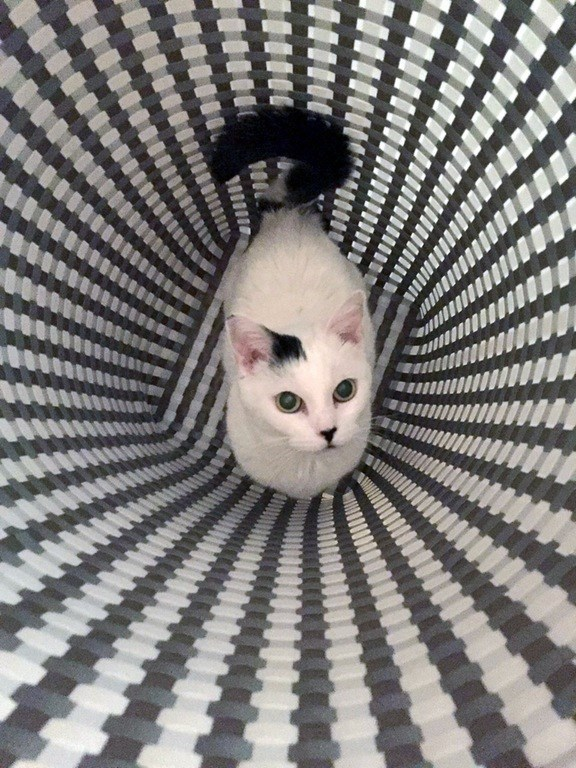 is this cat in a hamper or a wormhole