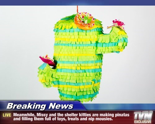 Breaking News - Meanwhile, Missy and the shelter kitties are making pinatas and filling them full of toys, treats and nip mousies.