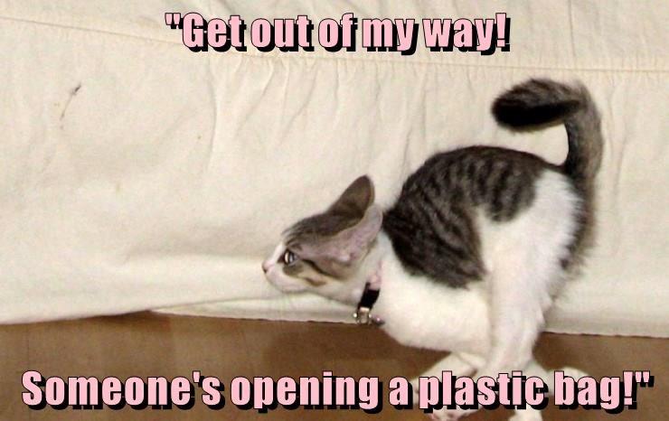 animals cat bag opening caption - 8794091520
