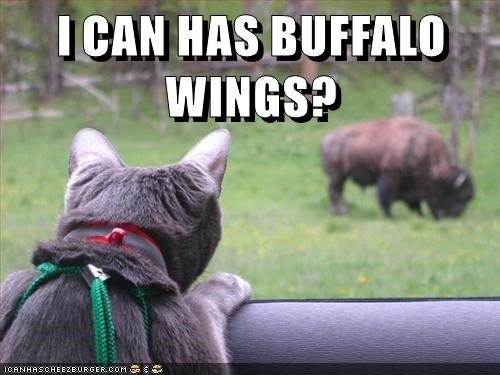 animals wings buffalo caption Cats - 8794095360