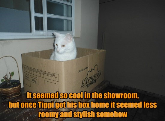 cool cat showroom box less roomy caption - 8794106112