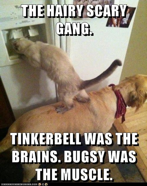 THE HAIRY SCARY GANG.  TINKERBELL WAS THE BRAINS. BUGSY WAS THE MUSCLE.