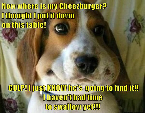 animals cheezburger dogs swallow caption - 8794118656