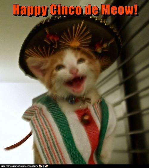 cindo de mayo,caption,Cats
