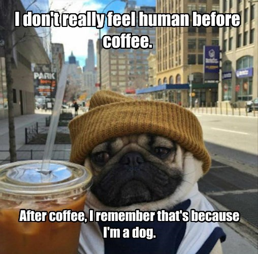 dogs,pug,human,hipster,coffee,caption