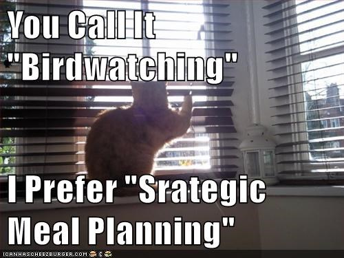 cat,meal,bird,caption,planning,watching