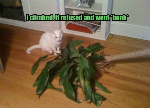 plants caption Cats bonk - 8794253312