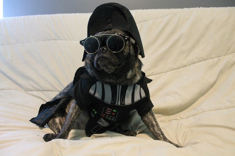 may the 4th be with you pug