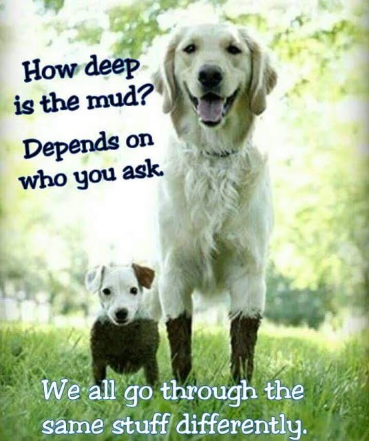 how deep is the mud dogs