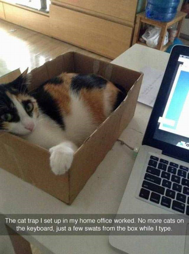 box cat trap next to computer