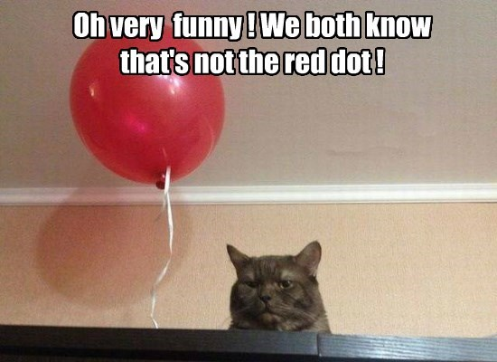 cat red dot caption funny
