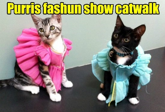 fashion paris purr caption Cats - 8794291968