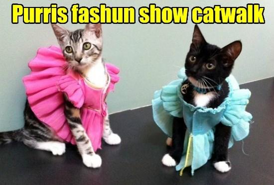 fashion paris purr caption Cats
