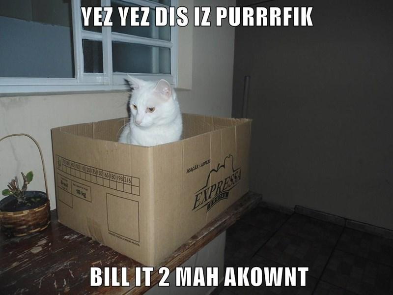 animals box caption Cats - 8794315008