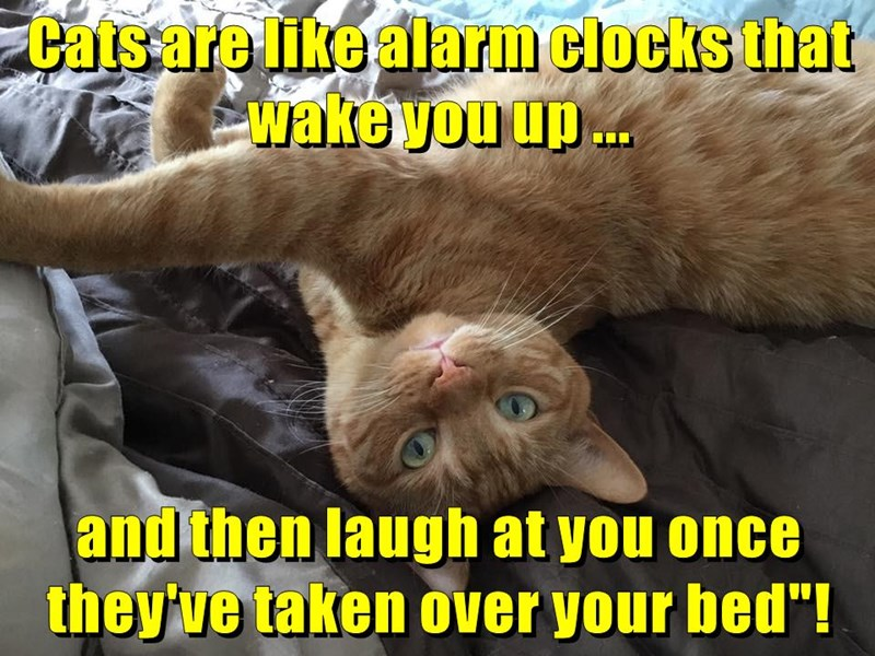 bed,alarm clock,caption,Cats