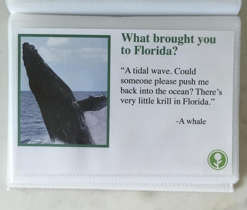 "Marine mammal - What brought you to Florida? ""A tidal wave. Could someone please push me back into the ocean? There's very little krill in Florida."" -A whale"